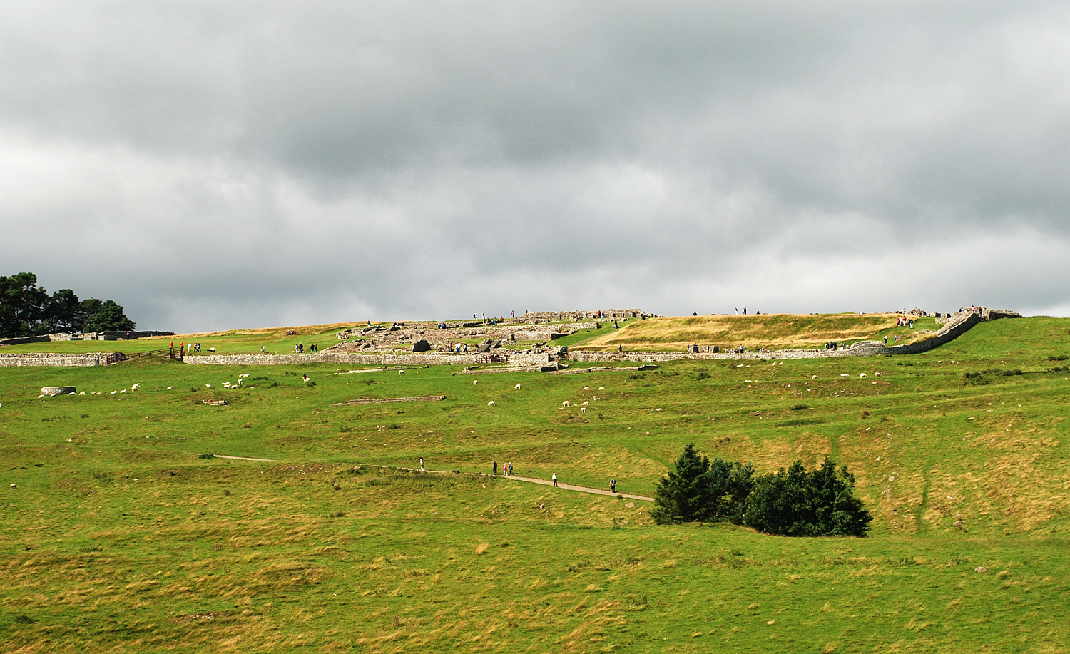 Housesteads general view